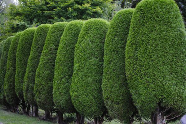 entretien jardin et espace verts lens b thune jardinier les jardins de l 39 artois pas de. Black Bedroom Furniture Sets. Home Design Ideas