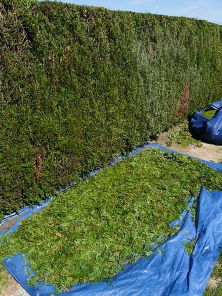 Entretien jardin et espace verts lens b thune for Jardinier entretien jardin
